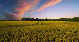 Καλλιέργεια αγροτικής γης και επιστροφή στο χωριό