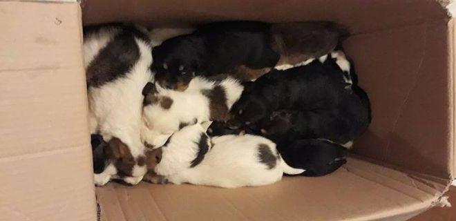 18 κουτάβια πετάχτηκαν σε γκρεμό στην Ανδρίτσαινα.