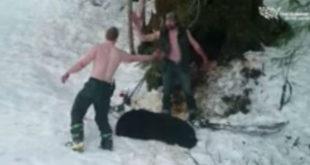 Σκότωσαν αρκούδα και τα νεογέννητα τους.
