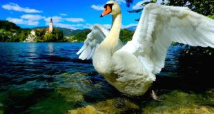 Ιζαντόρα Ντακ: Ένα παραμύθι για τη δύναμη των ονείρων και της ψυχής