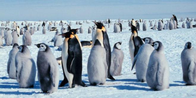 Εξαφανίστηκε αποικία πιγκουίνων.