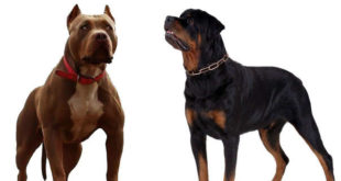 Δεν υπάρχουν σκύλοι-δολοφόνοι, υπάρχουν ανεύθυνοι ιδιοκτήτες…