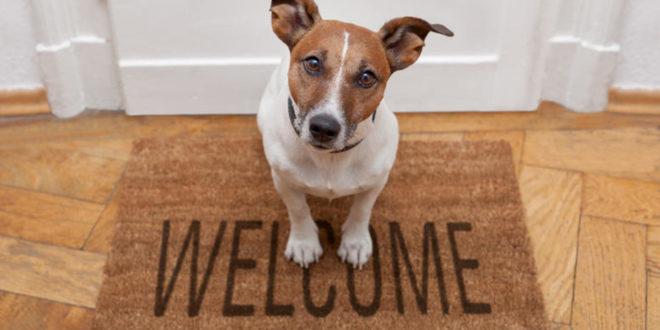 9 λόγοι που ένα κατοικίδιο θα βελτιώσει την ποιότητα της ζωής σας