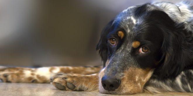 Ο σκύλος είναι το μοναδικό ζώο στον κόσμο που σε αγαπάει έτσι…Χωρίς λόγο