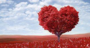 Να τι κάνει η αγάπη στο σώμα μας σύμφωνα με την επιστήμη