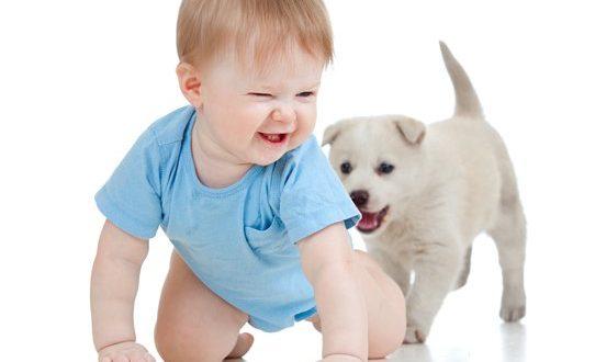 Κατοικίδιο ζώο και παιδί