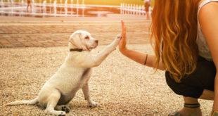 Οι σκύλοι «καταλαβαίνουν» τα λόγια και τη χροιά της φωνής μας