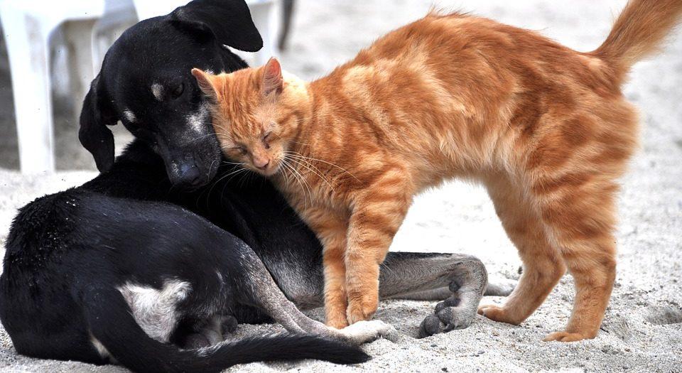 Νόμος για τα κατοικίδια ζώα: Υποχρεώσεις ιδιοκτητών και πρόστιμα