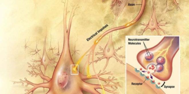 Πώς να αυξήσετε τα επίπεδα ντοπαμίνης και να μην ξανανιώσετε καταθλιπτικοί ή αγχωμένοι