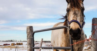 Τα άλογα μπορούν να επικοινωνήσουν με τους ανθρώπους