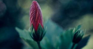 Οι τοξικοί άνθρωποι είναι λουλούδια που δεν ανθίζουν