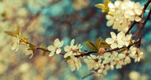 Κωστής Παλαμάς: Το ποίημα του μεγάλου ποιητή για το Μάρτιο!